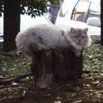 gogoku_cat