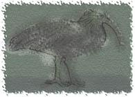 Thumbnail of post image 134