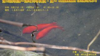 Thumbnail of post image 010